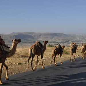 Camals Caravan into Mekele